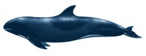 dauphin d'Electre