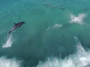 drones et dauphins2