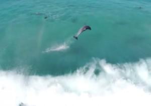 drones et dauphins3