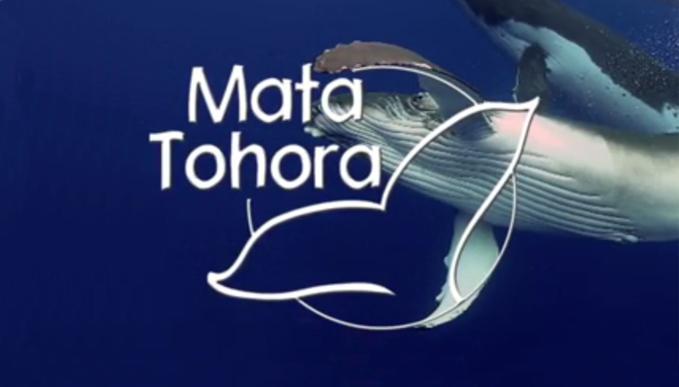 logo + baleines