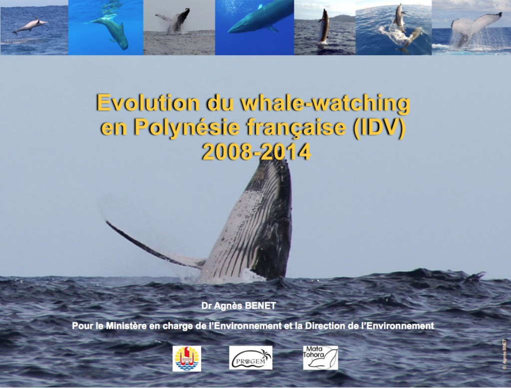 Evolution whale watching