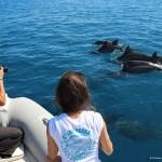 Agnes et Virginie + dauphins BD