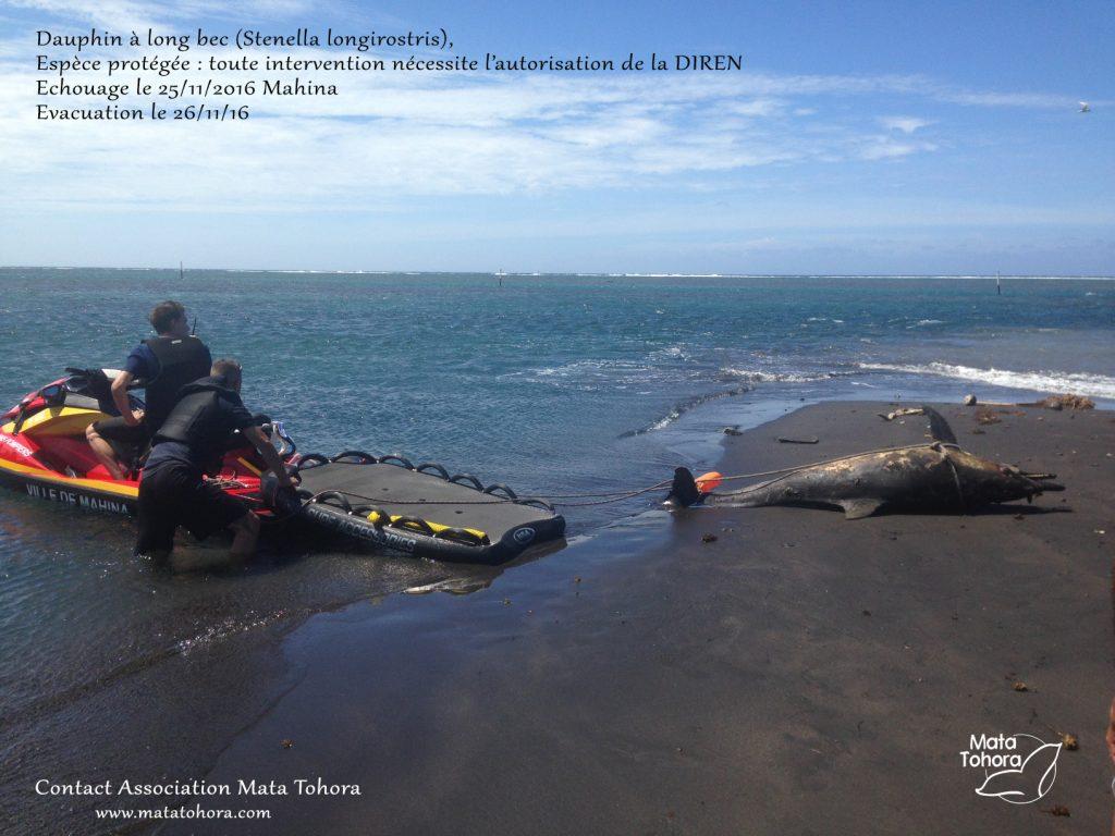 dauphin-evacuation