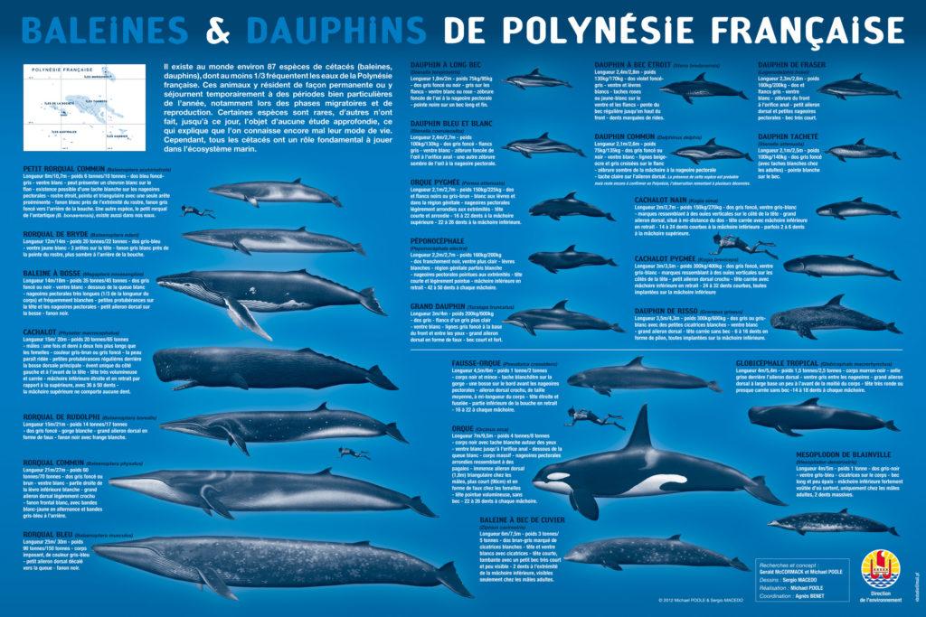L'attribut alt de cette image est vide, son nom de fichier est baleinesdauphins-pf-60x40-BD-1024x683.jpg.